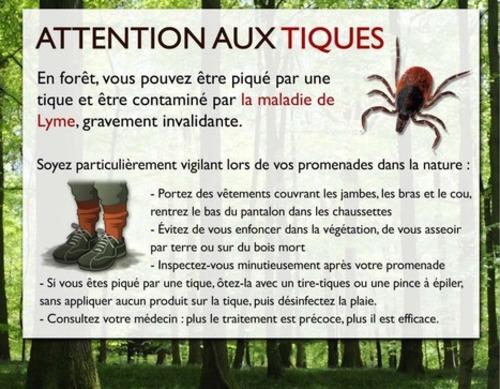 Les 5 choses à savoir sur la maladie de Lyme