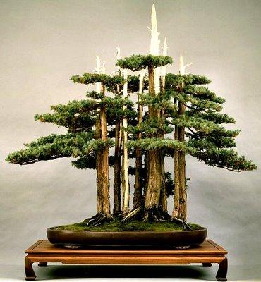 Les arbres-nains, conte japonais