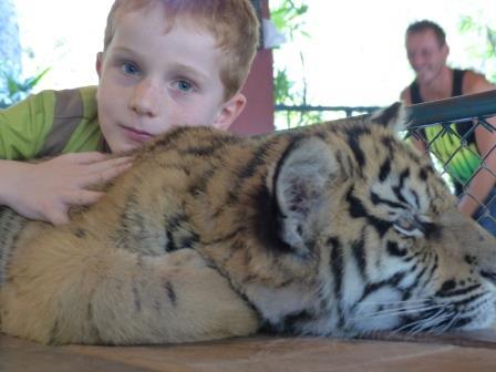 Chiang Mai - J'ai joué avec les bébés tigres