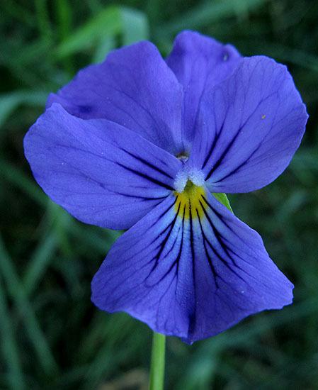 bleu55