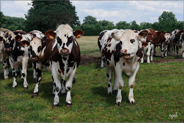 chat, vaches et compagnie (vacances à Moulins)