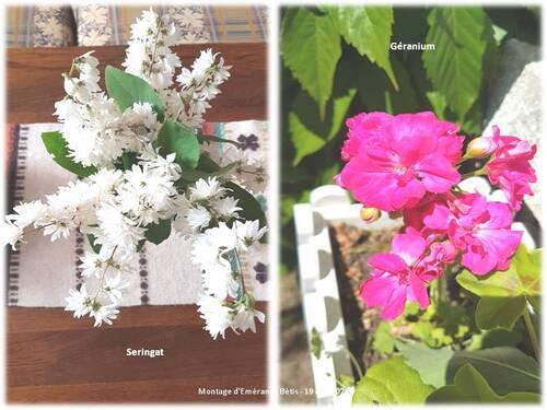 Les fleurs du jardin de la mi-mai