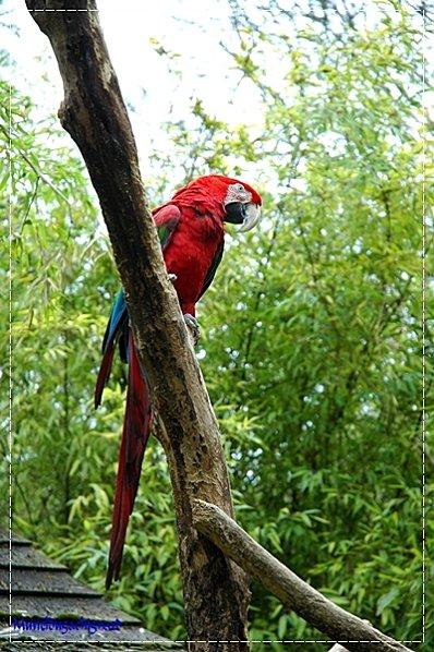 Zoo-Douai 0873