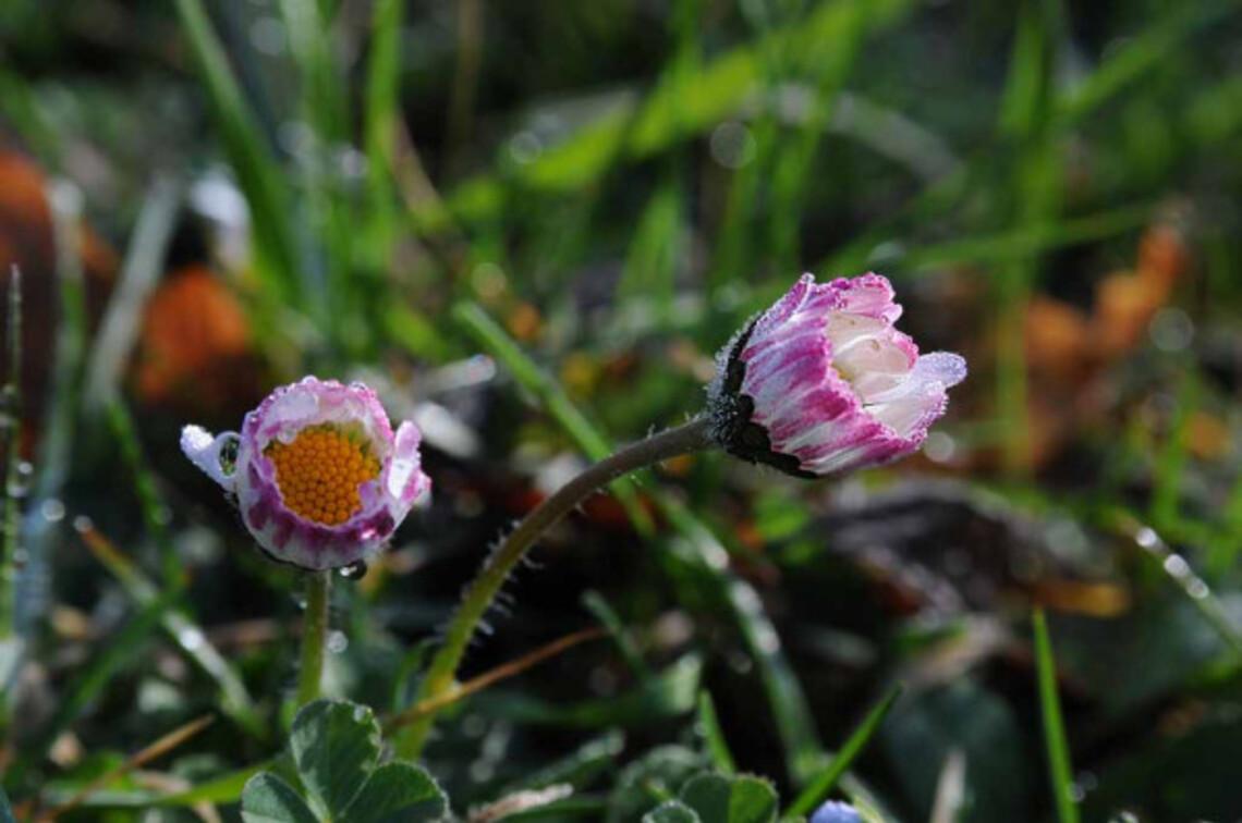 Fleurs-10 2570