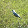 oiseaux (22)