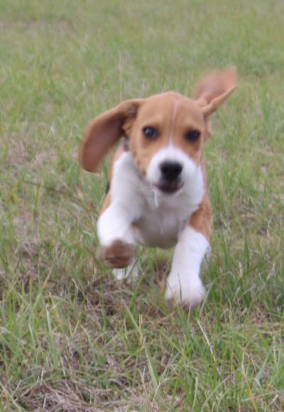 Blog de dyane : Traces de Vie, 1 ere visite chez le vétérinaire