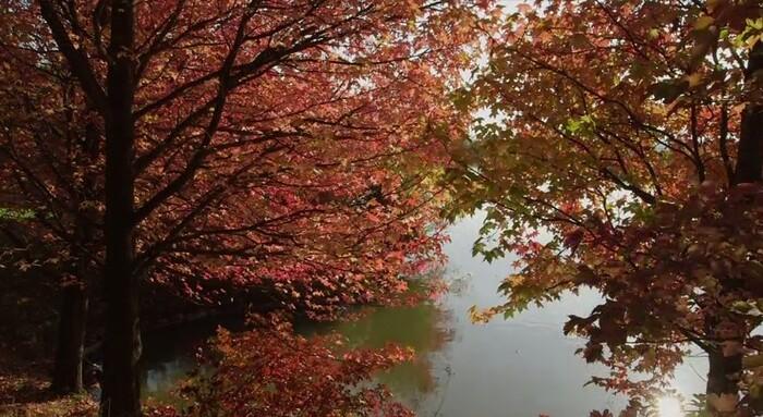 Jardin Jardinier : Le Bois Marquis