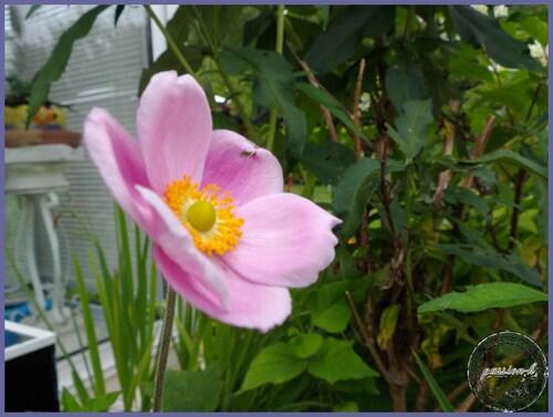 les nouvelles du jardin
