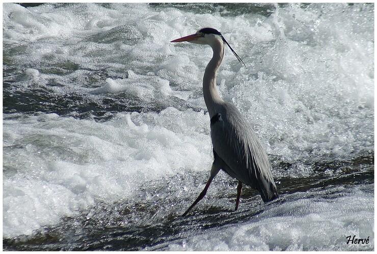 Sur les rives du Doubs