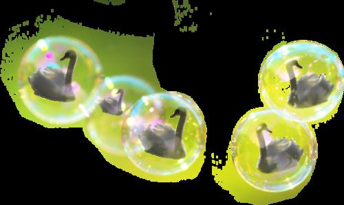 Tubes bulles de Cygnes
