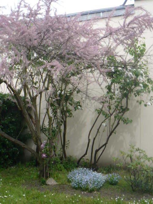 le jardin du pavillon ...