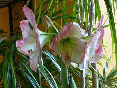 Communiquer avec les plantes Bob Makransky (extrait de son livre, Vivre la magie)