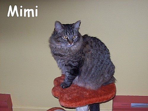 mimi2.jpg