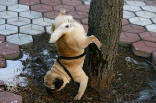 Humour animalier