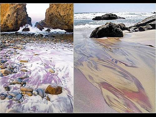 plages-de-couleurs--33-.JPG