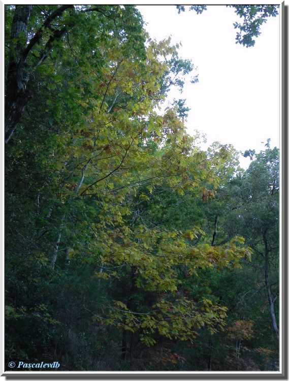 branches feuilles jaunes