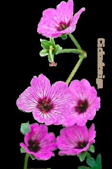 Virágok.5.