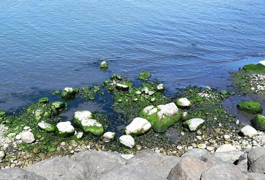 11/7/19 : Ste-Marie et son Port (FIN) - Animaux insolites...