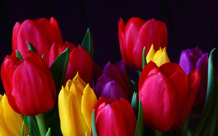 10 Images de fleurs - 2  - Des Tulipes