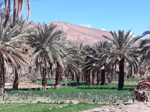 Un carré de verdure et des palmiers, magie de l'eau