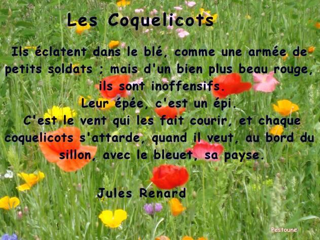 Les coquelicots de J Renard. Citation en image