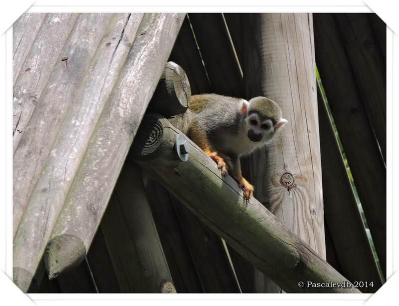 Zoo du Bassin d'Arcachon à La Teste de Buch - 18/20