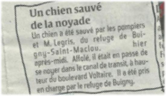 Chien sauvé de la noyade à Abbeville le 24/09/13