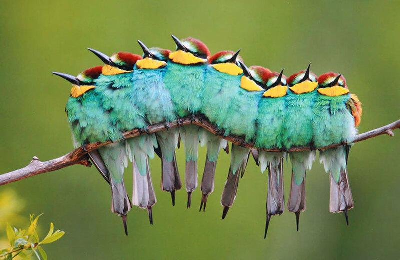 Résultats de recherche d'images pour «oiseaux»