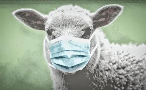 - Port du masque: une hystérie collective ? (Avec vidéos)