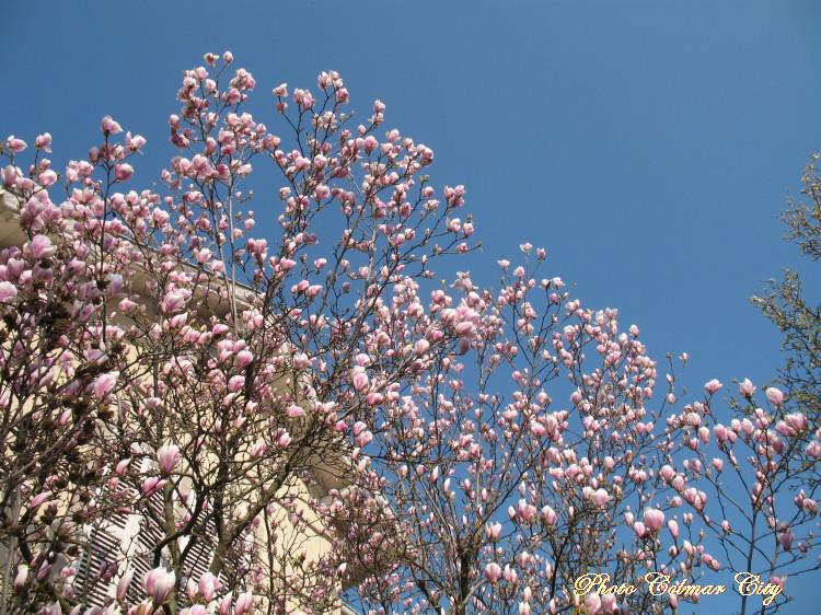 Le printemps est en avance