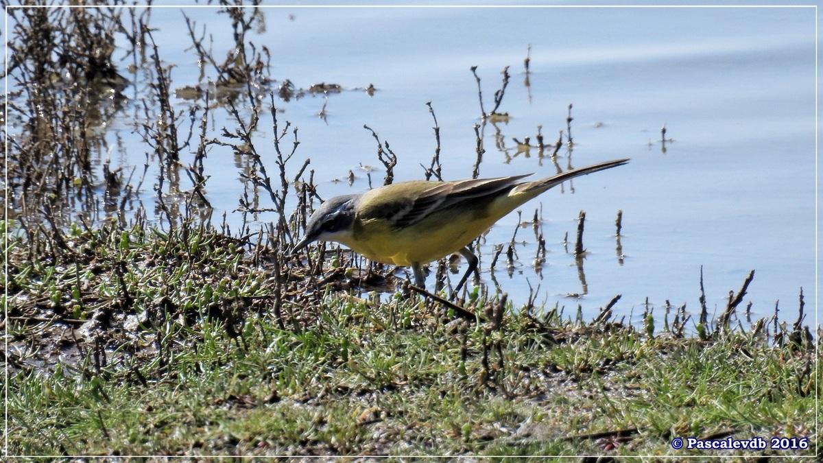 Printemps à la Réserve ornitho du Teich - Avril 2016 - 4/12