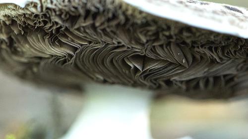 Mise en plis crantée ...