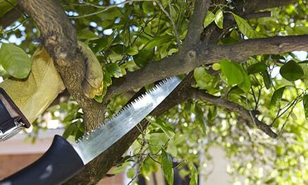 How to Pruning Your Trees
