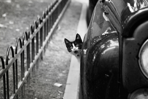 03 - Cats and car