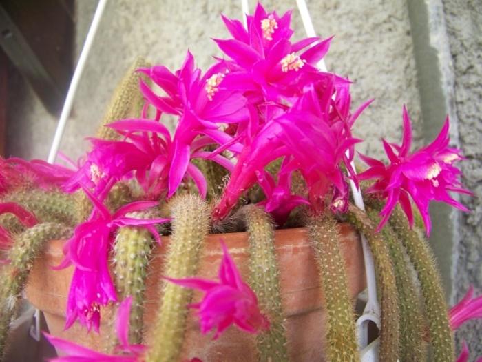 ùn sò belli sti fiori ?