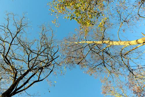 Des arbres nus en janvier ...