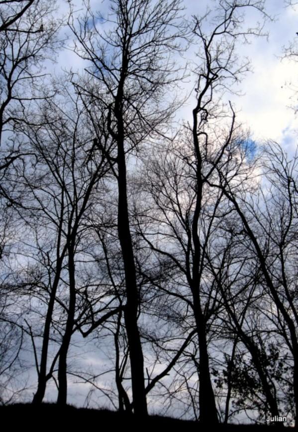 x04 des arbres