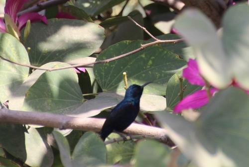 OIseaux en Inde