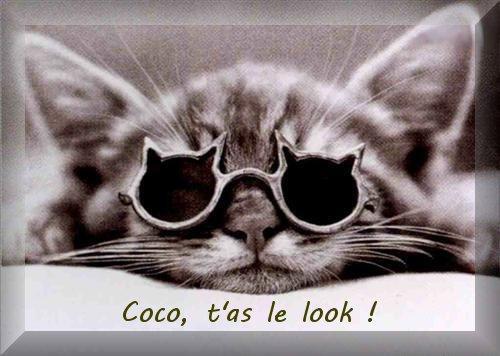T'as le look coco