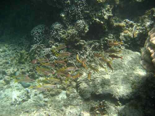Rêverie sous-marine à La Réunion