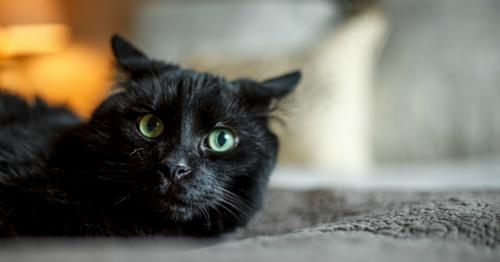 Colette femme à chats