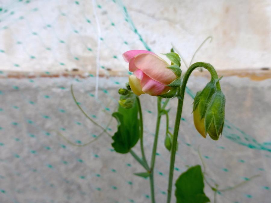 Fleurs d'été pour blog en pause!