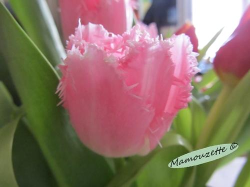 Très bon dimanche avec des tulipes