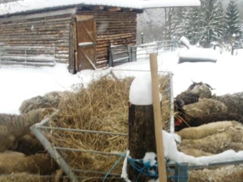 L'hiver à la montagne