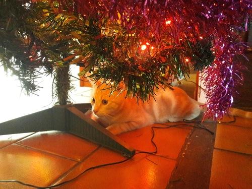 Simon's cat ou Carambar