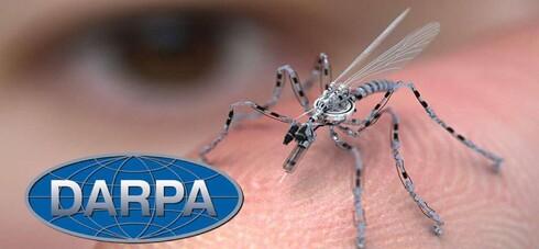 L'armée d'insectes du Pentagone