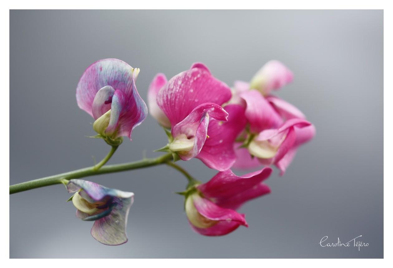 Une fleur pour compagnie