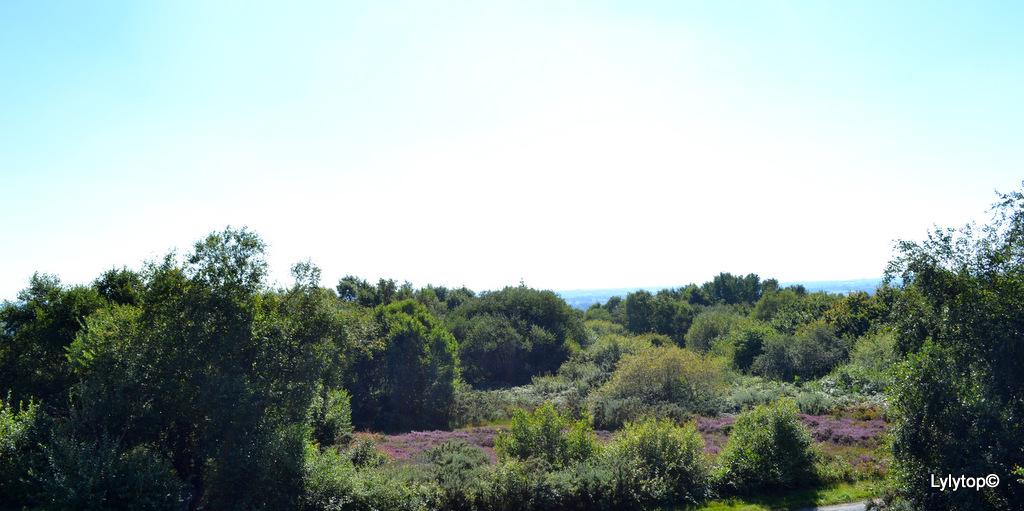Les moulins du mont Besneville
