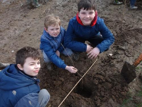 La plantation d'arbres avec Breizh Bocage