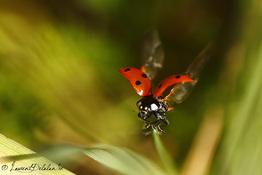 Insectes variés 4 - 2015